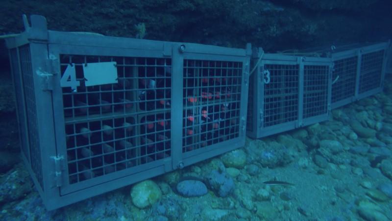 La historia de nuestra bodega submarina